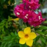 Еще немного флоры